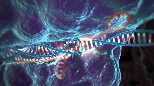 В США прошли первые эксперименты по генетическому изменению эмбрионов человека