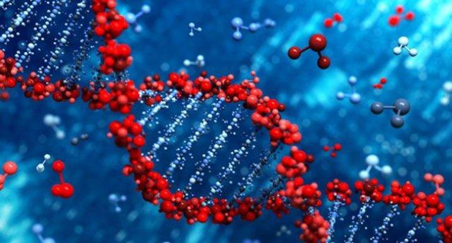 Найдены новые гены, связанные с ишемической болезнью сердца