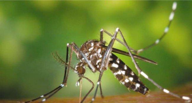 В Грузии зафиксирован первый за 2017 год случай вируса Денге