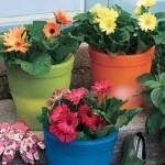 Уход за комнатными растениями в летний период