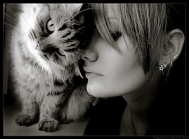 Кошка – любимое животное женщин